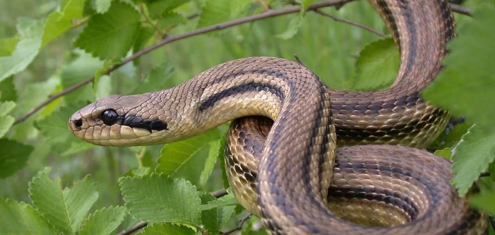 Top 10 längste Schlangen der Welt