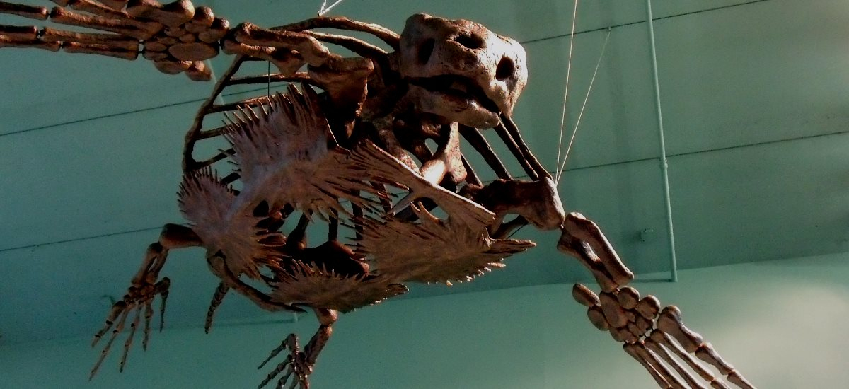 Skelett Archelon