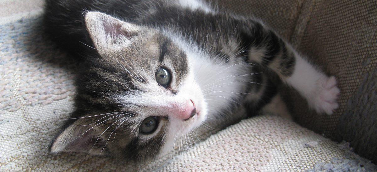 kleine Katze auf Sofa