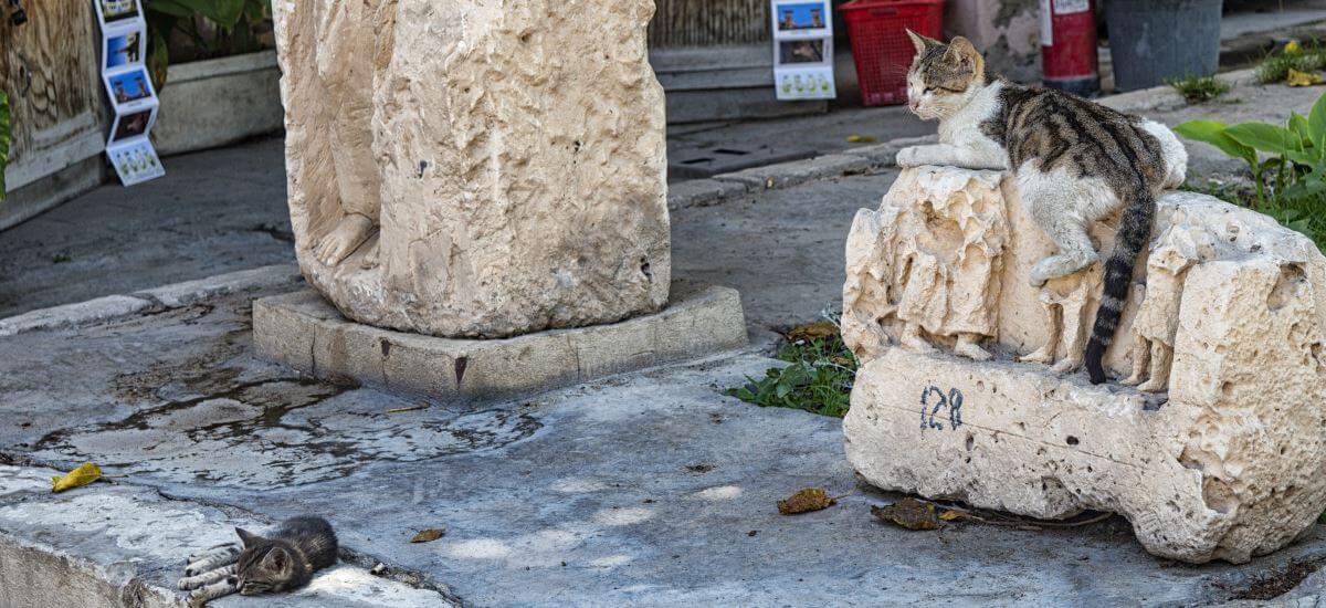 dicke Katze auf antikem Säulenrest