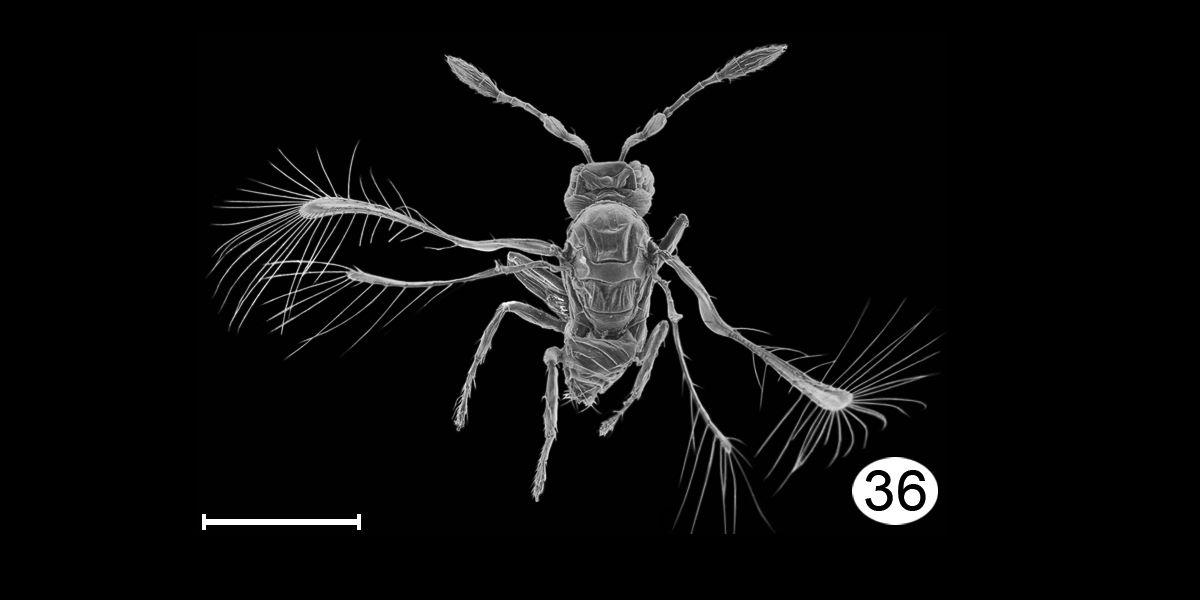 Insekt unter Mikroskop