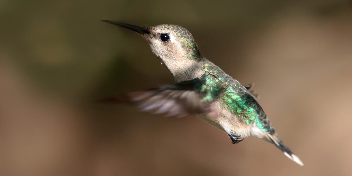 winzigere Vogel