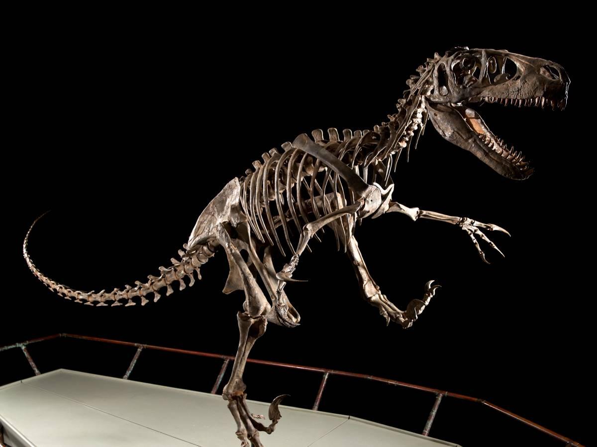 grösster Raptor