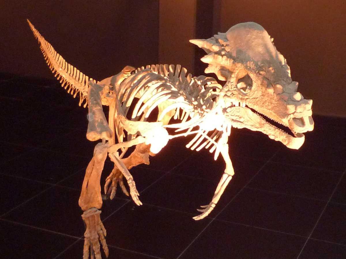 die grössten Dinos